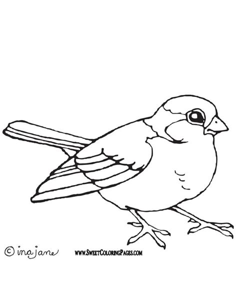 bird pictures to color bird coloring pages bestofcoloring