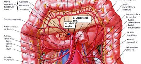 vasi addominali vasi arteriosi principali torace ed addome