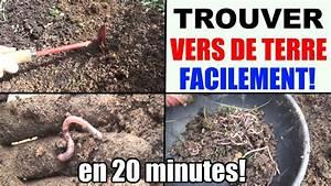 Vers De Terre Acheter : plante d 39 interieur terrarium ~ Nature-et-papiers.com Idées de Décoration
