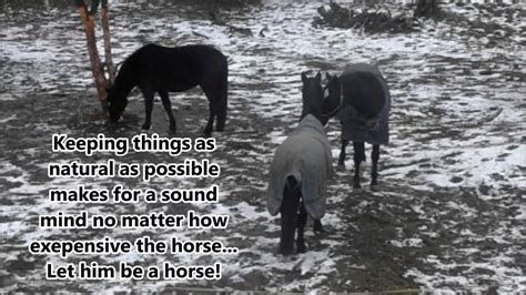 horses social