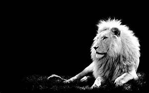 Lion – Black And White Photography | JSR-75