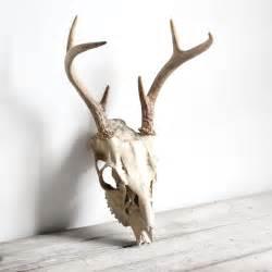 Deer Skull Side View
