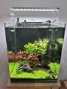 Co2 Rechner Aquarium : 30l nano cube flowgrow aquascape aquarium database ~ A.2002-acura-tl-radio.info Haus und Dekorationen