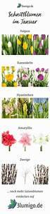 Welche Blumen Blühen Im Mai : welche blumen bl hen im fr hling welche blumen bl hen im april refreshin fr hlingsblumen fr ~ Eleganceandgraceweddings.com Haus und Dekorationen