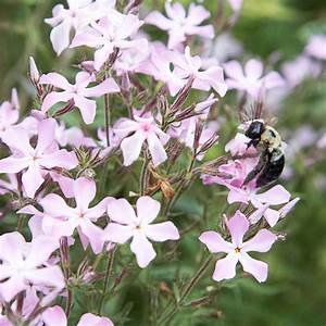 Bienen Vertreiben Essig : gestalten sie einen wilden lebensraum im garten ~ Whattoseeinmadrid.com Haus und Dekorationen