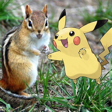pokemon  real life wildlife   metroparks