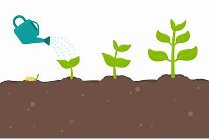 Plant Seeds Growth Sprouting Into Vector Turn