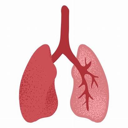 Lungs Transparent Textured Svg Logos Vector Vexels