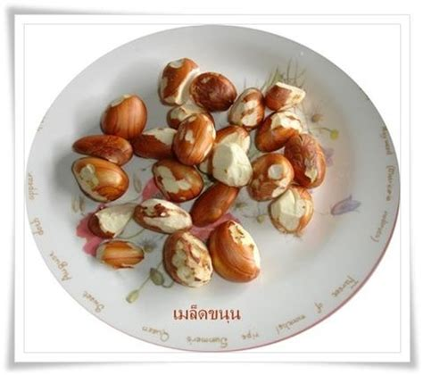 c駻amique cuisine عǵ 索عդªآҿաҷ
