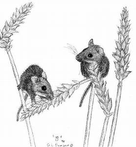 drawing mice - Google Search | pencil exercise | Pinterest ...