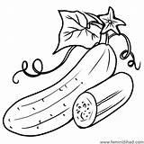 Cucumber Coloring Pages Leaf Printable Drawings sketch template