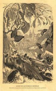 1883 Scavenger Insects Antique Engraving  Old Print Brehms