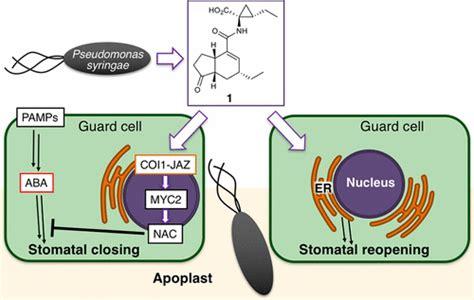 noncanonical function   small molecular virulence