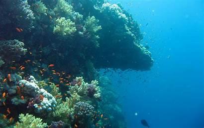 Underwater Wallpapers Pc Wallpapersafari