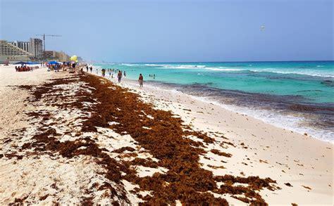 Retiran 22 mil metros cúbicos de sargazo en Quintana Roo ...