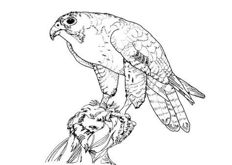 bird  prey clipart prey predator pencil   color