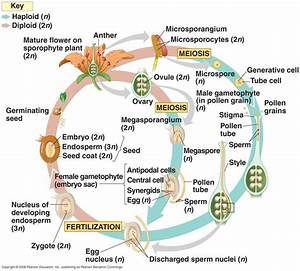 Biology Pictures  Angiosperm