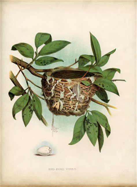 vintage printable lovely bird nest  egg natural