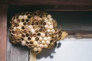 Wespen Im Haus : bauschaum gegen wespen sch tzt er zuverl ssig ~ Lizthompson.info Haus und Dekorationen