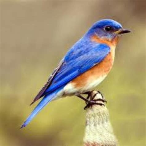 the blue bird s adventure by apoorva mishra