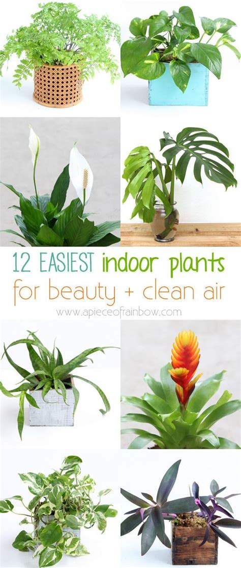 grow ls for indoor plants 12 easy indoor plants for beauty clean air plants