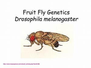 pldt dsl business plan price drosophila genetics lab report drosophila genetics lab report