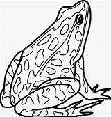 Frog Coloring Realistic Amphibian Printable Sheets Clipart Rana Disegnare Colorare Rane Above Challenge sketch template