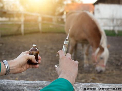 pferdekrankenversicherung ein ratgeber haustiermagazin