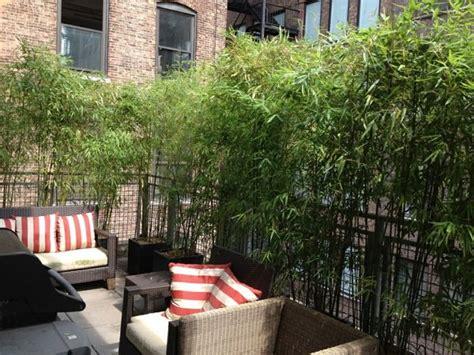 how to improve privacy of rooftop garden rooftop garden
