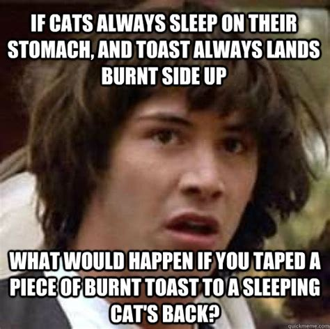 Toast Meme - if cats always sleep on their stomach and toast always lands burnt side up what would happen if