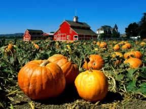 Pumpkin Patch Iowa Des Moines by Fall Fun At Central Iowa S Pumpkin Patches Des Moines Parent