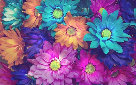 Pink Flower Desktop Wallpaper Colorful Daisy Flowers Pink Blue Orange Background Wallpaper 2560x1600 Wallpapers13 Com