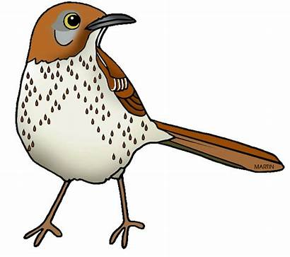 Georgia Thrasher Brown Clipart Bird State Clip