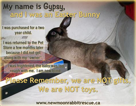 Chocolate Bunny Meme - rabbit ramblings monday meme day rabbits at risk for easter part 2