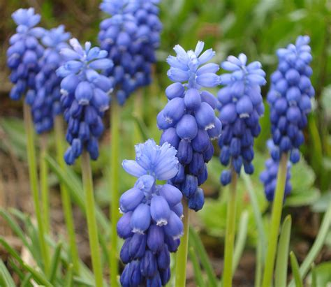 blue flowers names jen black author may 2010