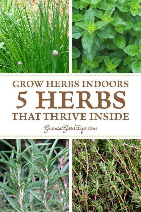 Herbs That Can Grow Inside by Grow Herbs Indoors 5 Herbs That Thrive Inside Awesome