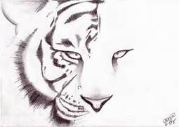 Simple Tiger Head Drawing