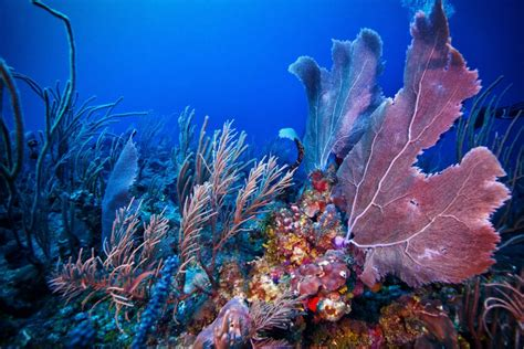 10 Amazing Belize Barrier Reef Facts You Need to Know - X'tan Ha Resort
