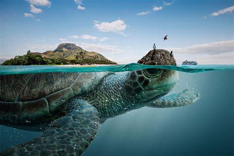 where to take furniture beautiful sea creatures imagined as ecuador s finest