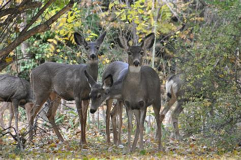 report connects climate change  disease  mo deer