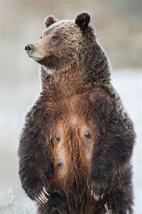 These 18 Photos Of Grizzly Bears Will Make You Want To Get