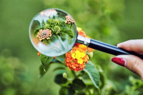 fundaments  botany professional development training