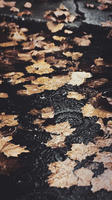 Asthetic Fall Wallpaper Iphone X by 15 Gorgeous Happy Fall Iphone X Wallpapers Preppy Wallpapers