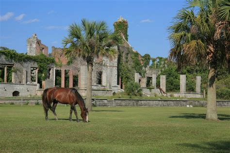 Discover the Cherished Secrets of Remote Cumberland Island ...