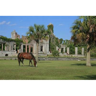 Discover the Cherished Secrets of Remote Cumberland Island