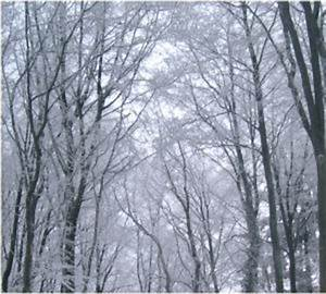 Wieviel Frost Verträgt Die Obstblüte : frostsch den obstbau news ~ Frokenaadalensverden.com Haus und Dekorationen