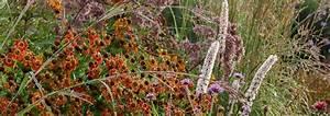 Winterharte Stauden Kaufen : staudenversand stauden kaufen stauden bestellen pflanzplanung pflanzenverwendung ~ Orissabook.com Haus und Dekorationen