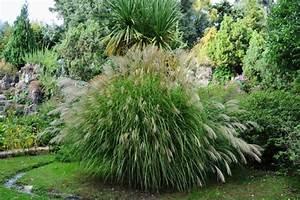 Winterharte Gräser Garten : miscanthus sinensis silberfeder bambus und pflanzenshop ~ Michelbontemps.com Haus und Dekorationen