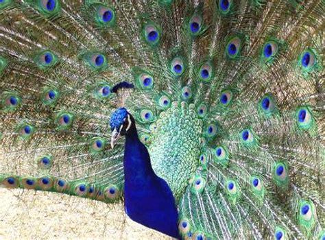 colibri cuisine oiseaux le diaporama des beaux oiseaux