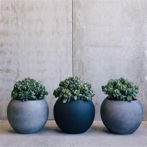 deze prachtige kamerplanten zijn ook  de winter heel